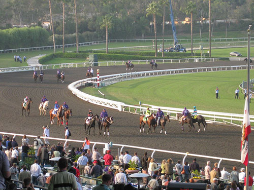 Breeders' Cup Horses Warming Up